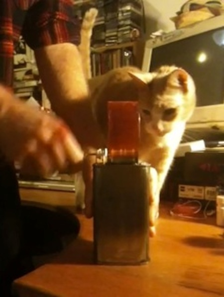 Dan Friel's Music Box + Cat